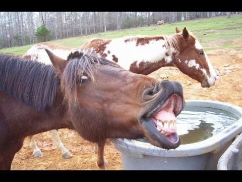 Top 10 Funny Horse Videos 2015