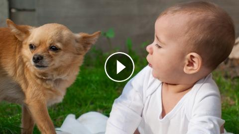 Funny Baby And Puppy Videos